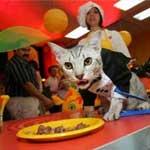 Restaurante para gatos