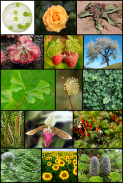 Diversity of plants image version 3.png